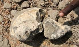 fossil humanlike cranium on rocky ground with yellowish gray rubble; a human finger is pointing to the skull at the right