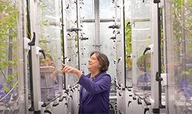 Susan Trumbore in a plant-growing laboratory