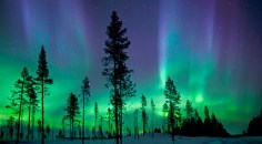 flashes of blues, greens, and purples show in the aurora borealis behind a stand of pine trees