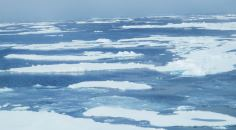 ice floes on the surface of the sea