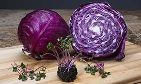 red cabbage microgreens in front of mature red cabbage on a light-colored countertop