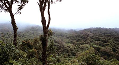 clouds overlying a rainforest in Costa Rica