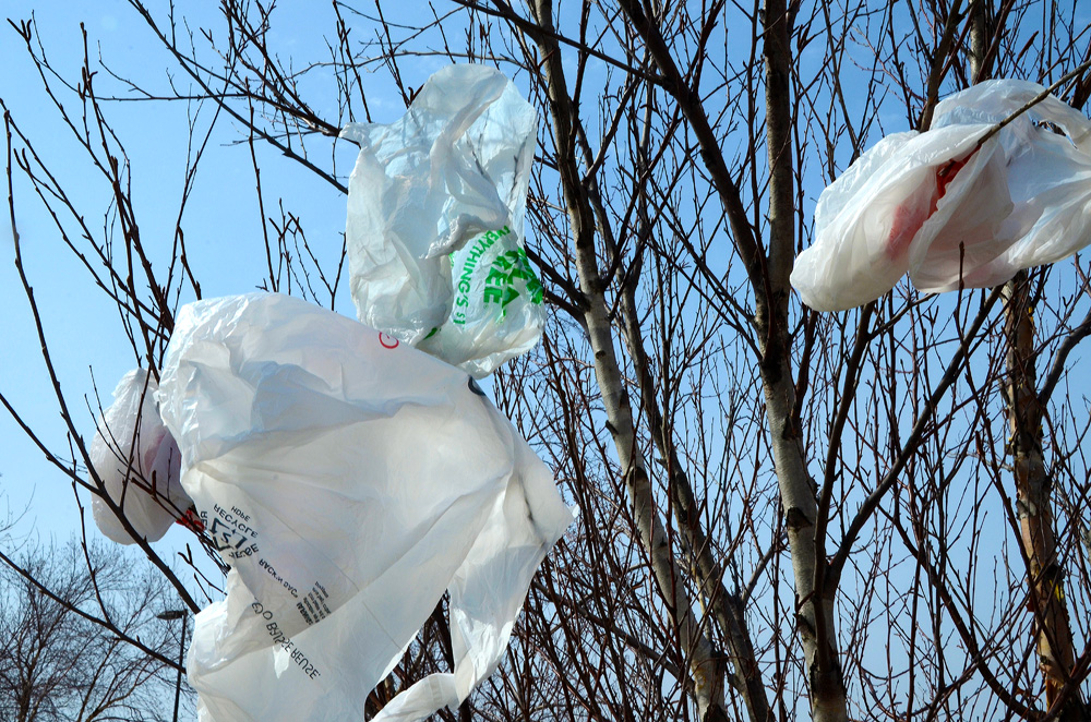 plastic bags entangled in tree branches
