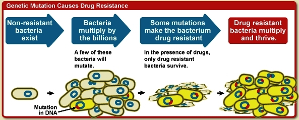 Steps involved in drug resistance: nonresistant bacteria exist; bacteria multiply; mutations make drug-resistant bacteria; drug-resistant bacteria multiply and thrive