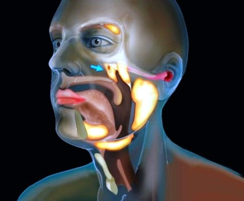 Computerized illustration of a human head, with highlighted areas showing locations of the salivary glands [behind the nose (indicated by a blue arrow), under the tongue, below the jaw, and toward the back of the jaw]