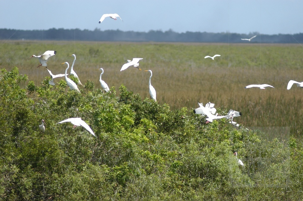 Photo of white birds in wetlands