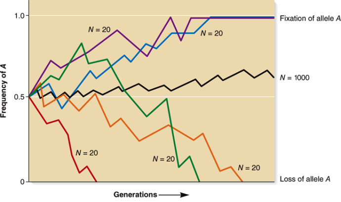 Plot of frequency of A versus generations; five differently colored lines indicate N = 20, and these lines jump to the extremes; and 1 line indicates N = 1000, which is fairly stable over time